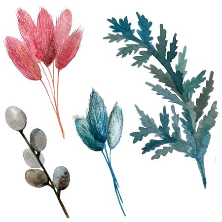 watercolor illustration. set of dried flowers. willow largus leaf