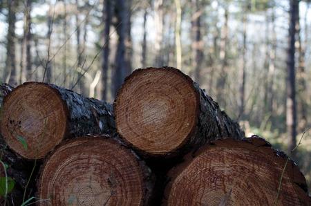 piled: Freshly cut tree logs piled up