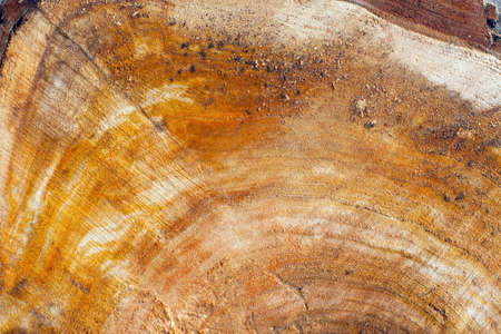 abatement: Wood texture - cross-section