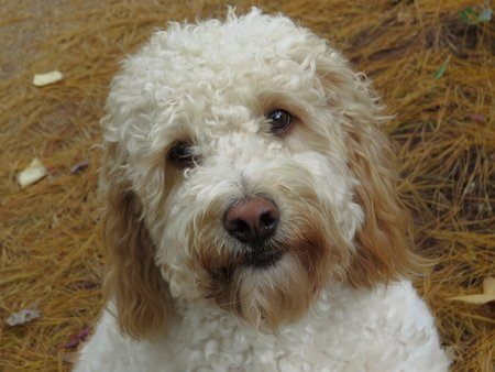 shaggy: Sheep Dog shaggy dog Stock Photo