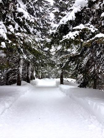 snow road: Empty snow road in mountains, Slovakia Stock Photo