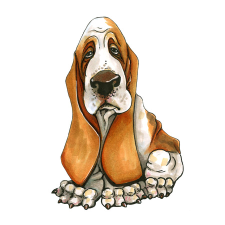 A dog of Basset Hound breed. cute puppy. On isolated white background. Stock Photo