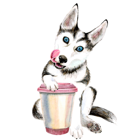 The Husky dog drinks coffee from a pink glass. cute puppy. Isolated on white background. Stockfoto