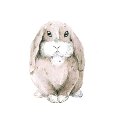 Watercolor drawing of a rabbit. Cute lop-eared rabbit isolated on white background.