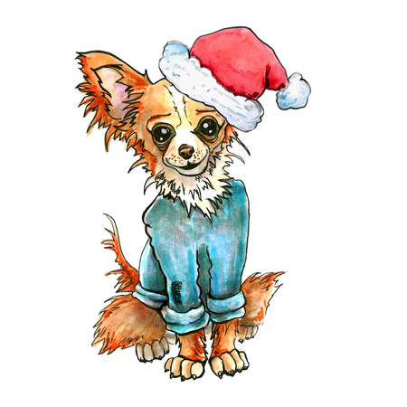 Chihuahua dog in Santa Claus hat. Christmas puppy. tramp isolated on white background. Stock Photo