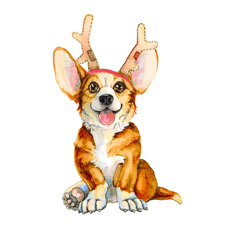 Dog breed corgi in deer horns. Christmas cute puppy. New Year. Isolated on white background. holiday