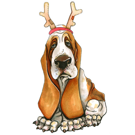 A basset hound breed dog in a Christmas hat, deer horns. Cute Christmas puppy. Santa Claus. Isolated on white background.