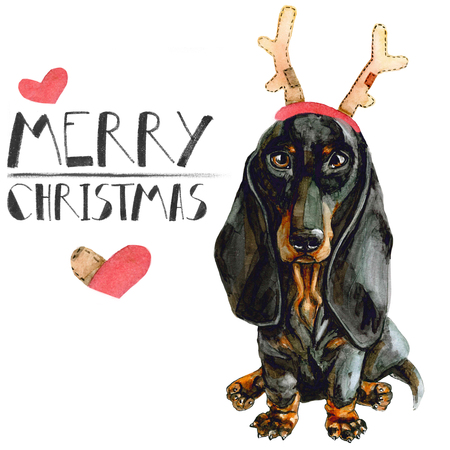 Christmas card with dog dachshund in deer horns. isolated on white background. New Year