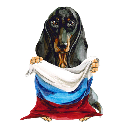 Dog breed dachshund holds in his hands the flag of Russia. Russian Federation. Moscow. Isolated on white background.