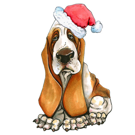 A basset hound breed dog in a Christmas hat. Cute Christmas puppy. Santa Claus. Isolated on white background. Stock Photo