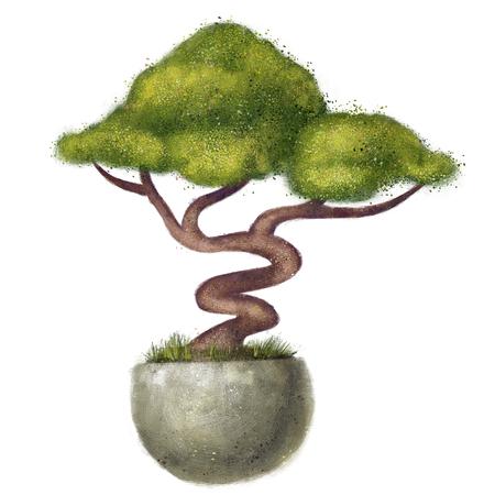 Tree in round flowerpots. Bonsai Shrub bush isolated on white background. illustration