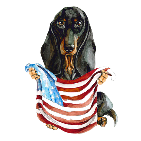 Dog breed dachshund holds in his hands the flag of American. Isolated on white background. New York. Zdjęcie Seryjne