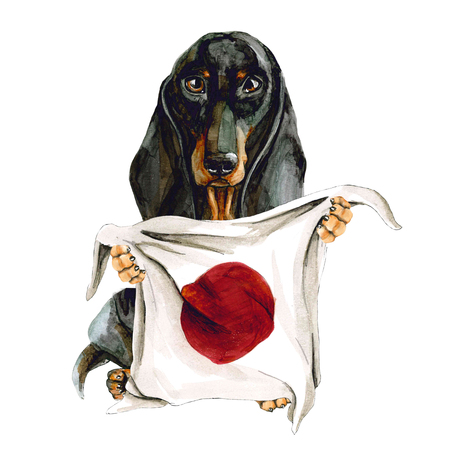 Dog breed dachshund holds in his hands Japanese flag. Japan Tokyo. Zdjęcie Seryjne