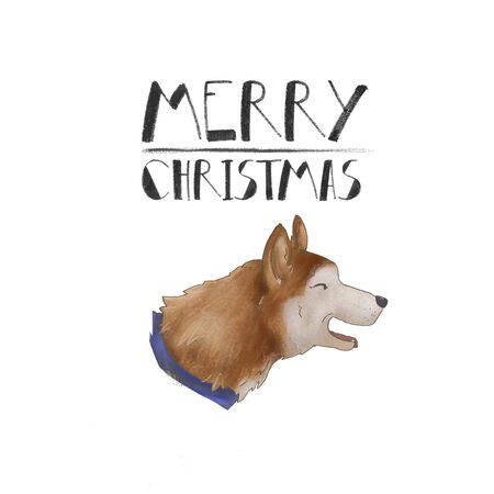 Portrait of a dog breed husky. Merry Christmas. isolated on white background. x-mas