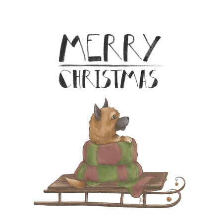 Little cute puppy of breed Spitz in a scarf on a sled. Greeting card with a dog. Merry Christmas. Isolated on a white back