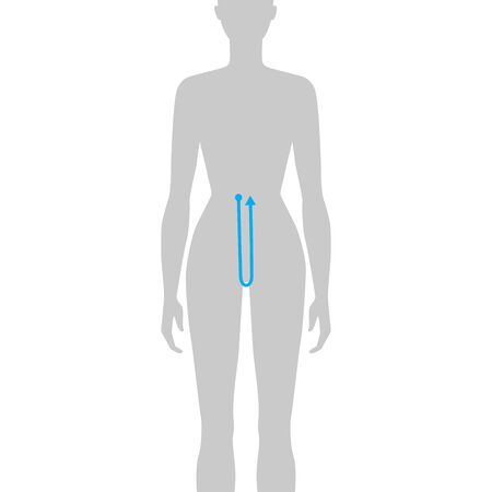 Women to do crotch depth measurement fashion Illustration for size chart. 7.5 head size girl for site or online shop. Human body infographic template for clothes.