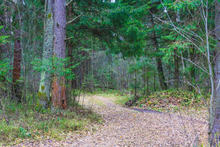 Forest path strewn with leaves