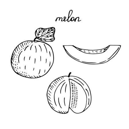 Melon set vector illustration sketch