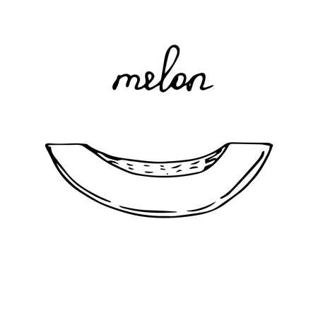 Melon slice vector illustration sketch