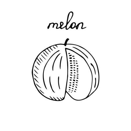 Cut melon vector illustration sketch Vettoriali