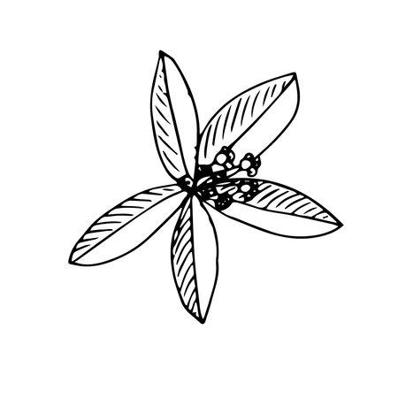 A sprig of sandalwood with flowers vector illustration sketch