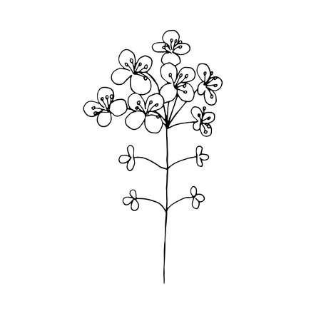 Rapeseed flowers vector illustration hand drawing sketch
