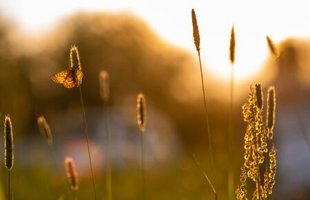 Summer landscape. butterfly sits on grass in sunset lighting Фото со стока