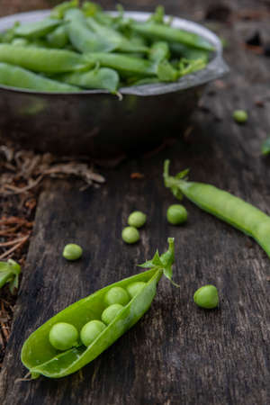Harvest of ripe pods of green peas. Green peas in stitches in a metal bowl on a wooden natural background. Fresh green peas pods on a wooden board