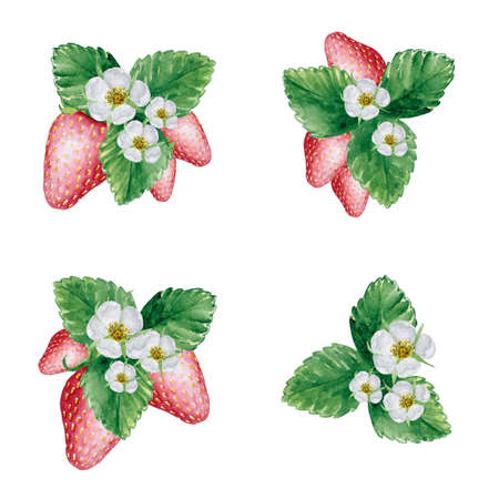 5045 Strawberry elements watercolor illustration