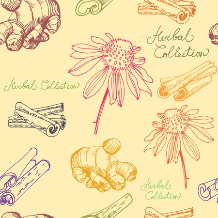 oriental medicine: Hand drawn spices and herbs collection Illustration