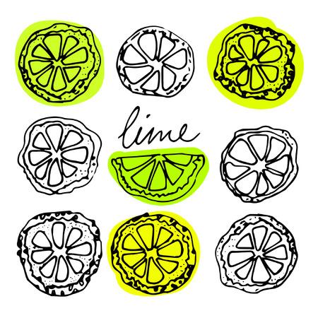 lime slice: Sketched citrus fruits, lime slice, calligraphy citrus.