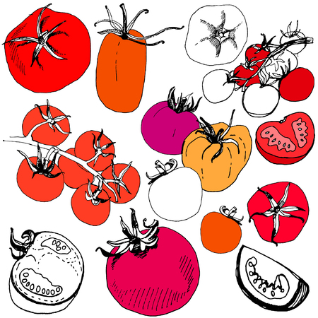 Big set of sketched tomato. Great set of hand drawn tomatoes isolated on white background. Various tomatoes vector illustration. Ilustração