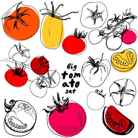 스케치 토마토의 큰 집합입니다. 흰색 배경에 고립 된 손으로 그린 토마토의 집합. 다양한 토마토 벡터 일러스트 레이 션입니다.