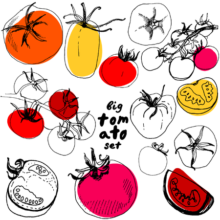 restaurante italiano: Conjunto grande de tomate esbozada. Gran conjunto de los tomates dibujados a mano aisladas sobre fondo blanco. Vaus tomates ilustración vectorial.