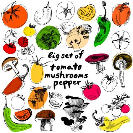 큰 야채를 설정합니다. 야채의 거대한 세트. 토마토, 고추, 버섯의 훌륭한 컬렉션. 거대한 채식을 설정합니다.