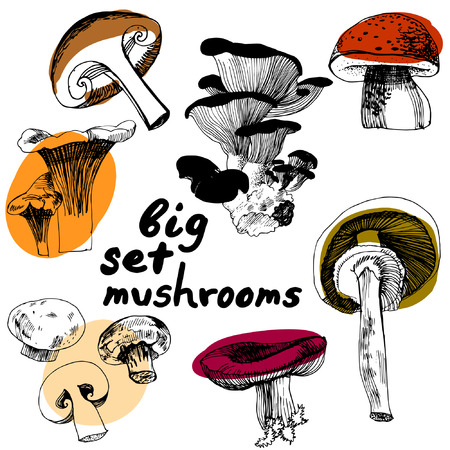 edible: Sketched edible mushrooms. Big set of mushrooms.