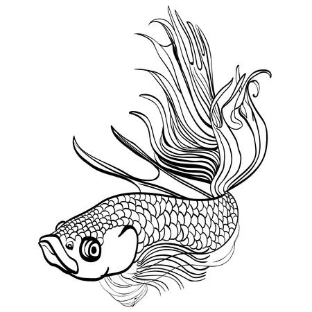 soldier fish: Sketched hand drawn aquarium fish Cockerel. Betta splendens