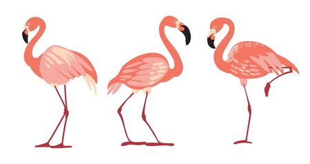 3 tropical birds flamingos in different poses standing straight