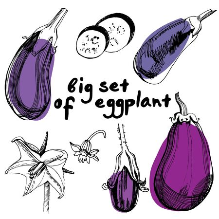 Eggplants set. Hand drawn sketch style eggplants. Fresh and sliced aubergine. Vintage illustration of healthy fresh organic food.