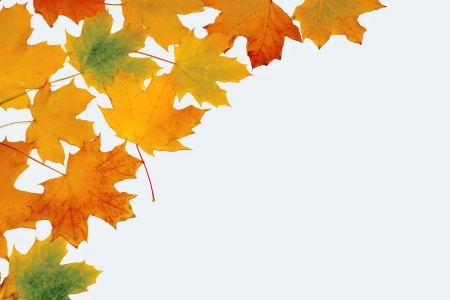 placer: background of yellow autumn leaves placer on white