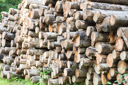 kindling: the stack of the dry firewood for furnace kindling