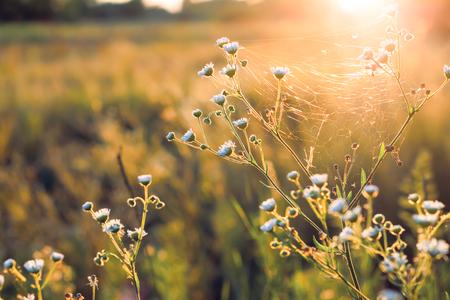 Bloemen en planten op een achtergrond zonsondergang.