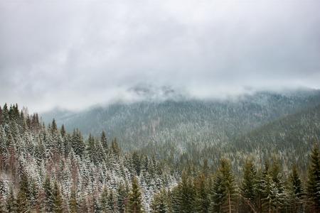 Winterlandschap met sneeuw bedekt bomen in de Karpaten.