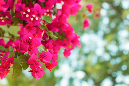 a branch of pink blossoming flowers close-up. shallow depth of field.