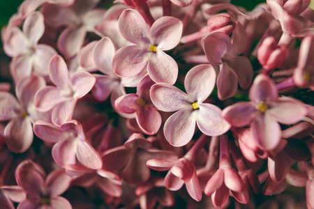Macro image of blooming lilac violet flowers