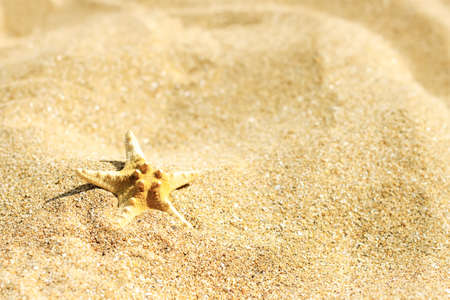 Starfish on a sand beach with copy space for text. Summer background