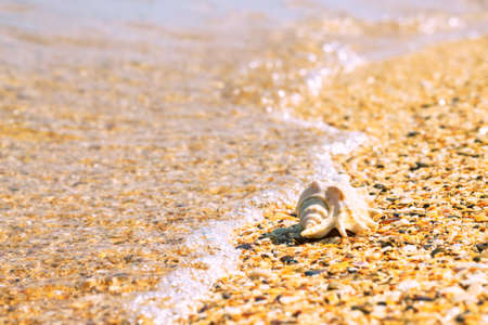 Conch shell on beach with waves. Summer background with copy space for text Stock Photo