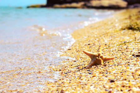Starfish on beach with waves. Summer background with copy space for text Stock Photo