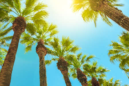 Palm trees against blue sky. low point of view. summer background