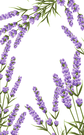 background of purple lavender flowers, watercolor style flowers. elegant flowers. vector background lavender background for text, greeting card, invitation, banner, business cards, template. Illustration